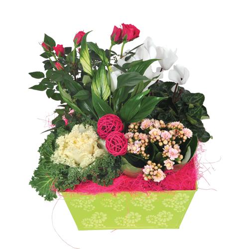 Composition florale pour cimeti re pivoine etc for Composition florale exterieur hiver