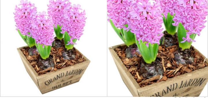livraison fleur deuil pas cher - pivoine etc
