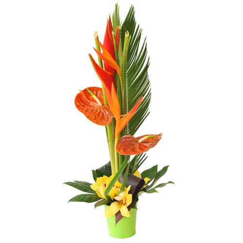 Fabuleux Composition florale avec fleurs exotiques - pivoine etc FP29