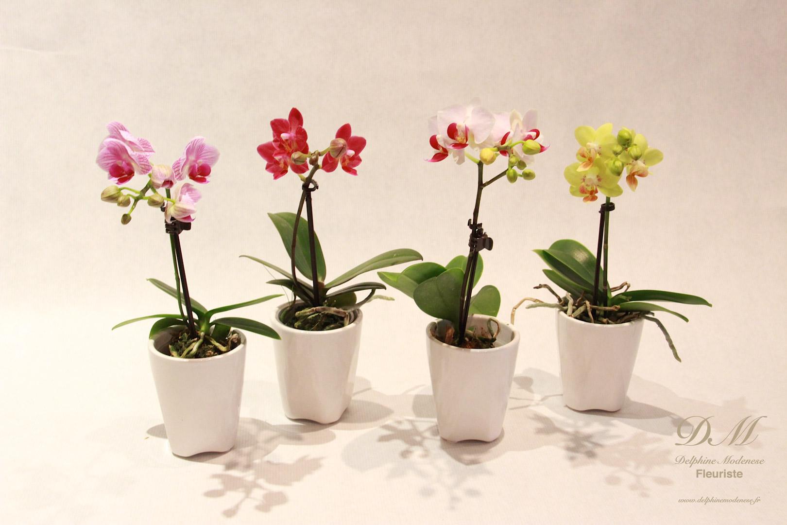 Fleur fleuriste pivoine etc for Mini fausse plante