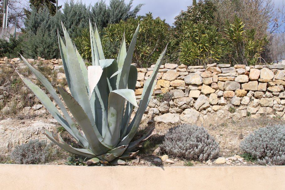 Plante verte exotique exterieur pivoine etc for Plante verte exterieur