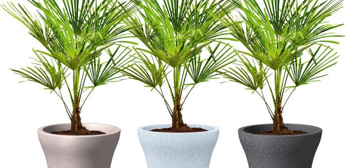 plante pour pot exterieur resistant au gel les plantes vertes qui poussent vite pot opus. Black Bedroom Furniture Sets. Home Design Ideas