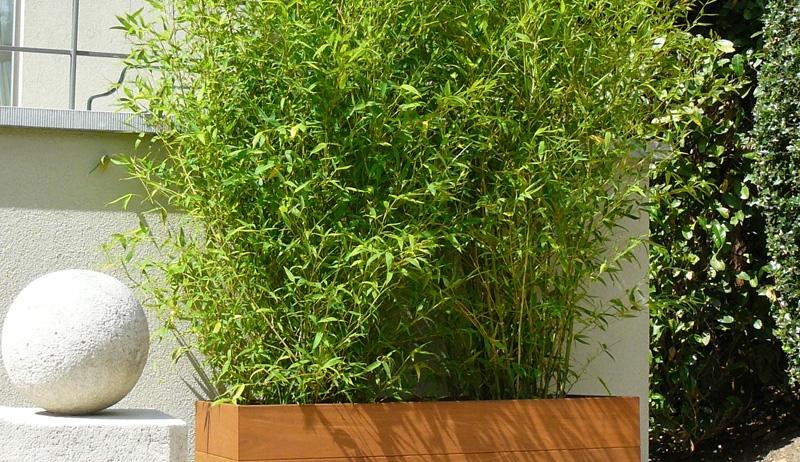 Quel bac pour bambou pivoine etc for Bambou decoratif exterieur