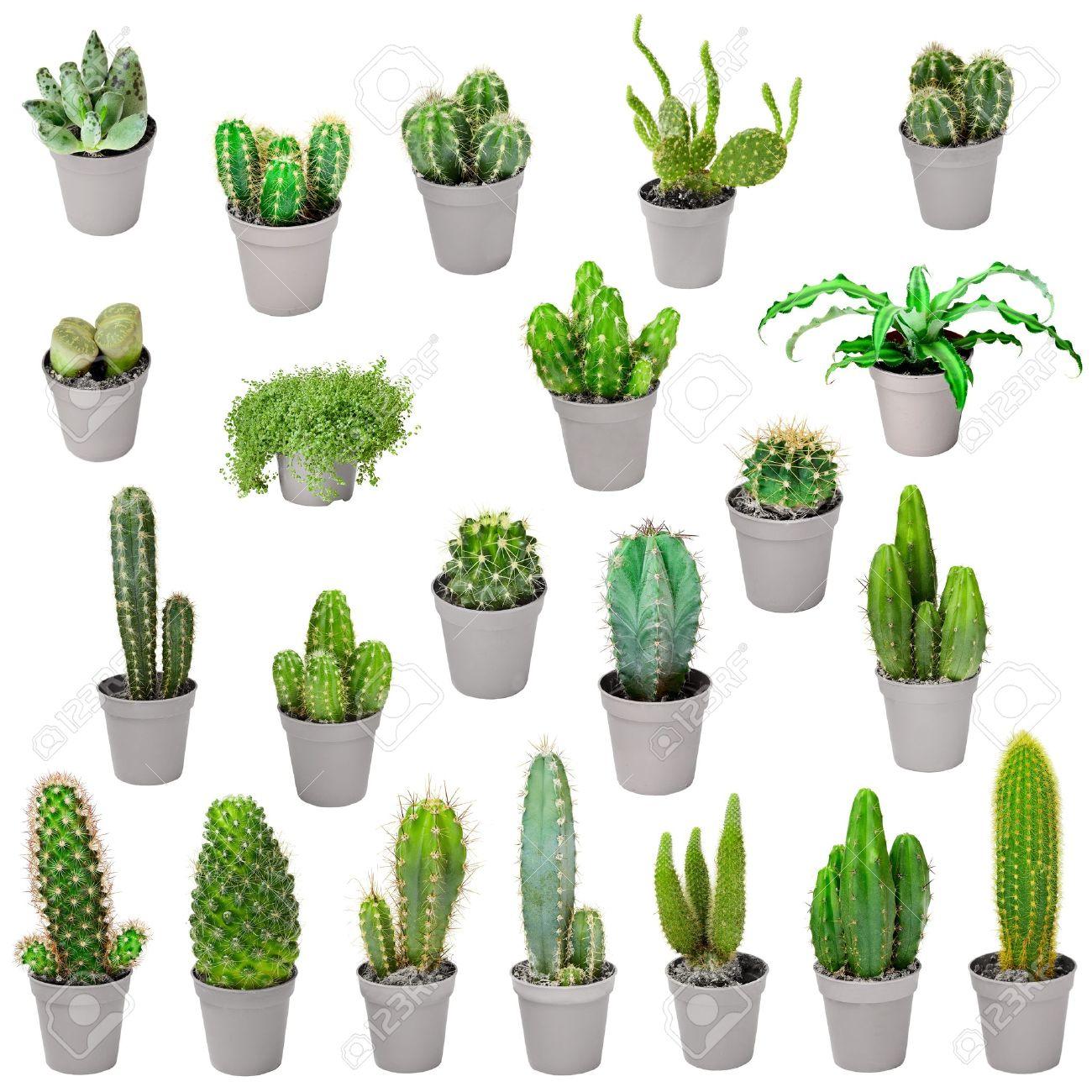 cactus plante interieur pivoine etc. Black Bedroom Furniture Sets. Home Design Ideas