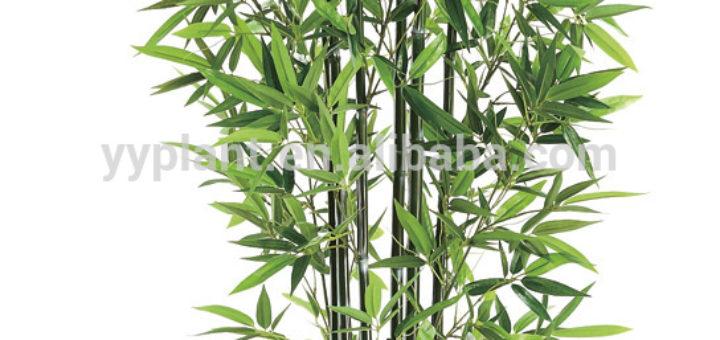 Plante interieur haute pivoine etc for Plante verte haute exterieur