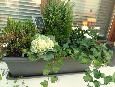 plantes jardiniere hiver pivoine etc. Black Bedroom Furniture Sets. Home Design Ideas