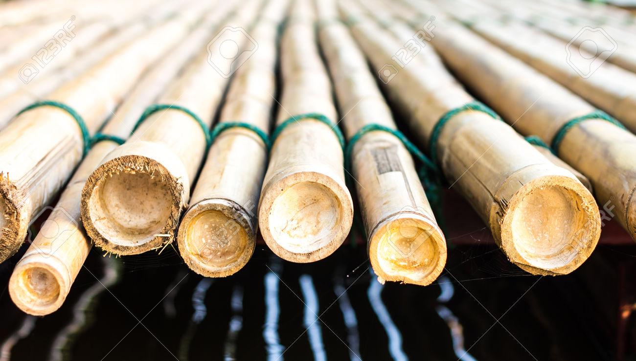 Bambou coup pivoine etc - Replanter un bambou coupe ...