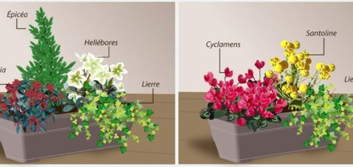 Jardiniere d hiver exterieur pivoine etc for Composition florale exterieur hiver