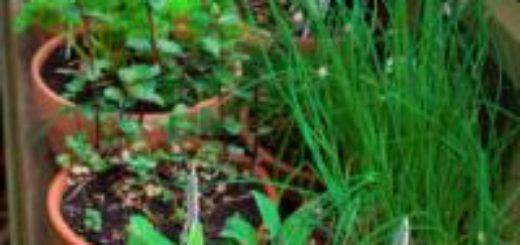 Plante tropicale rustique pivoine etc for Yucca exterieur rustique