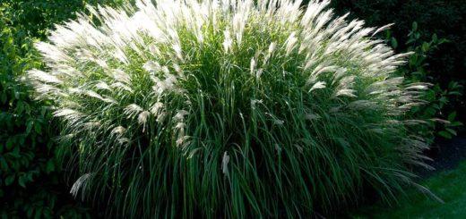 Grande plante exterieur en pot pivoine etc for Grande plante exterieur