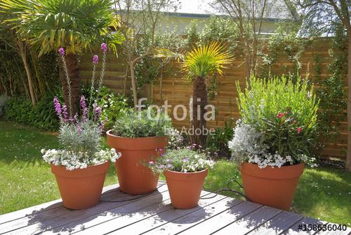 Arrosage des plantes exterieur pivoine etc for Arrosage exterieur
