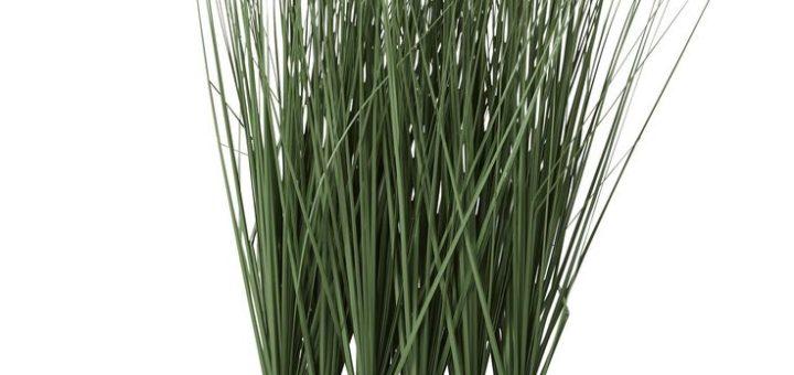 Plante verte haute exterieur pivoine etc for Plante haute