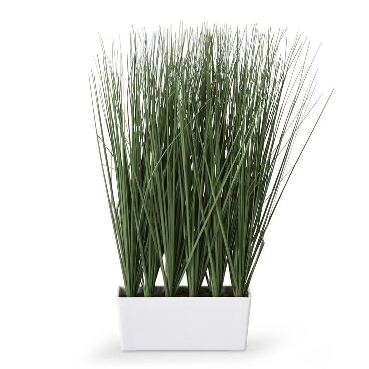 plante verte haute exterieur pivoine etc