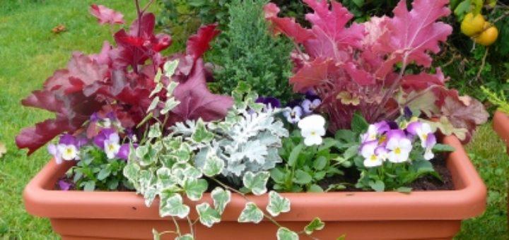 jardiniere fleurs automne hiver pivoine etc. Black Bedroom Furniture Sets. Home Design Ideas
