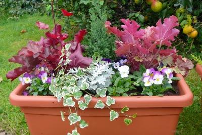 Jardiniere fleurs automne hiver pivoine etc for Jardiniere d hiver