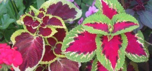 Plante en pot exterieur sans entretien pivoine etc for Plante exterieur sans entretien