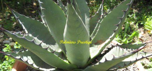 Plante hiver archives pivoine etc for Plante exterieur en pot resistant au gel