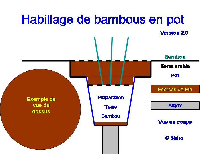 Comment planter des bambous en pot pivoine etc - Comment planter des bambous ...
