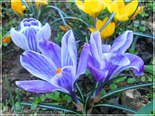 Fleurs en hiver au jardin for Fleurs au jardin