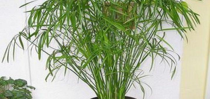 Plante verte exterieur en pot pivoine etc for Plante verte exterieur
