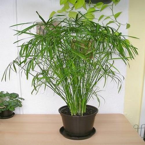 Plante verte exterieur en pot pivoine etc for Plante hiver exterieur