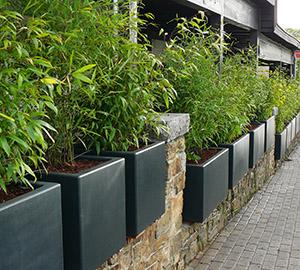 Planter Du Bambou En Jardiniere Pivoine Etc
