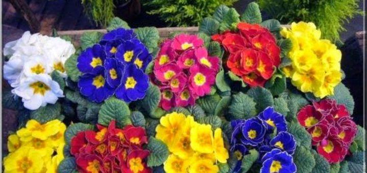 Fleurs en hiver au jardin pivoine etc - Fleurs en hiver ...