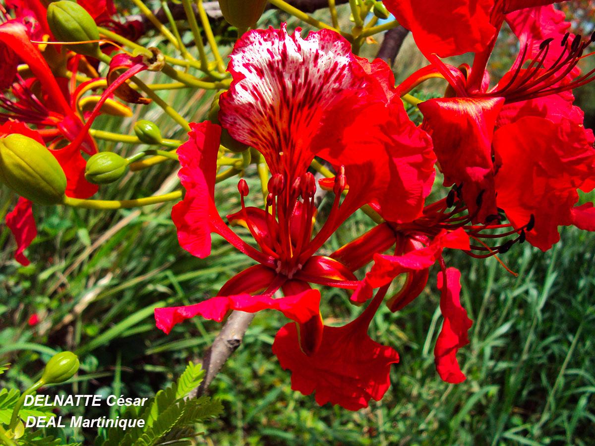 Plante ornementale exotique pivoine etc for Plante ornementale