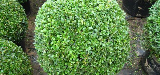 Plante grasse hiver pivoine etc for Plante decorative exterieure