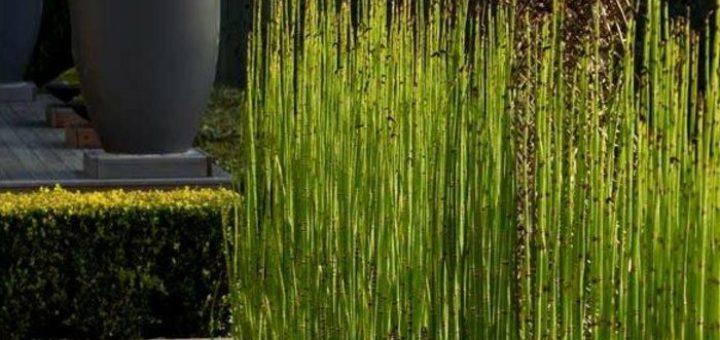 Bambou plante exterieur pivoine etc for Plante bambou exterieur