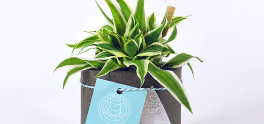 plante grasse d ext rieur pivoine etc. Black Bedroom Furniture Sets. Home Design Ideas