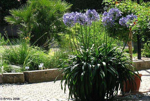 Plante fleuri en pot qui ne gele pas pivoine etc - Plantes qui ne craignent pas le gel ...