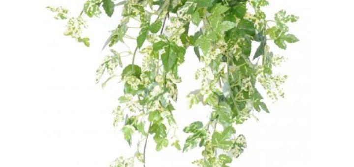 Plantes vertes retombantes d int rieur pivoine etc for Plantes vertes retombantes