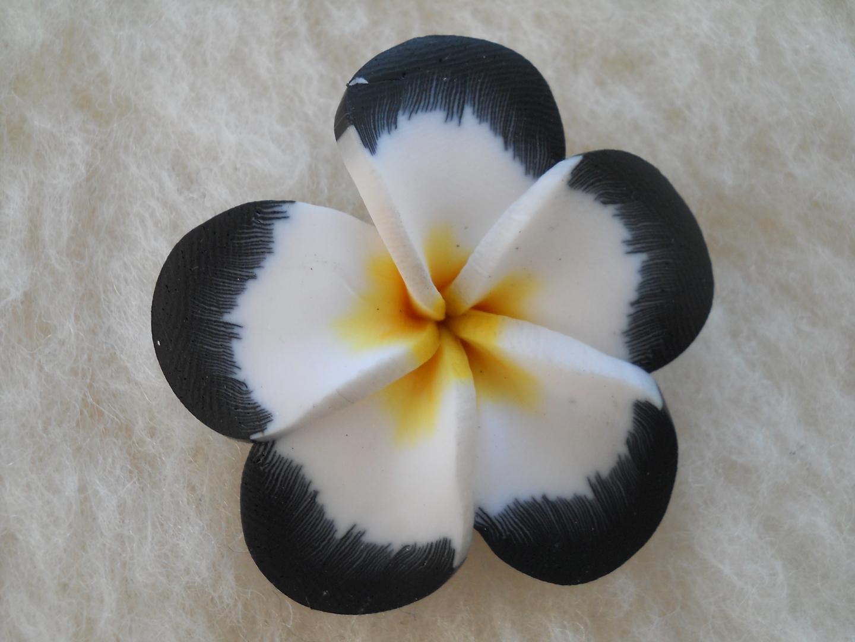 fleurs exotiques blanches pivoine etc. Black Bedroom Furniture Sets. Home Design Ideas