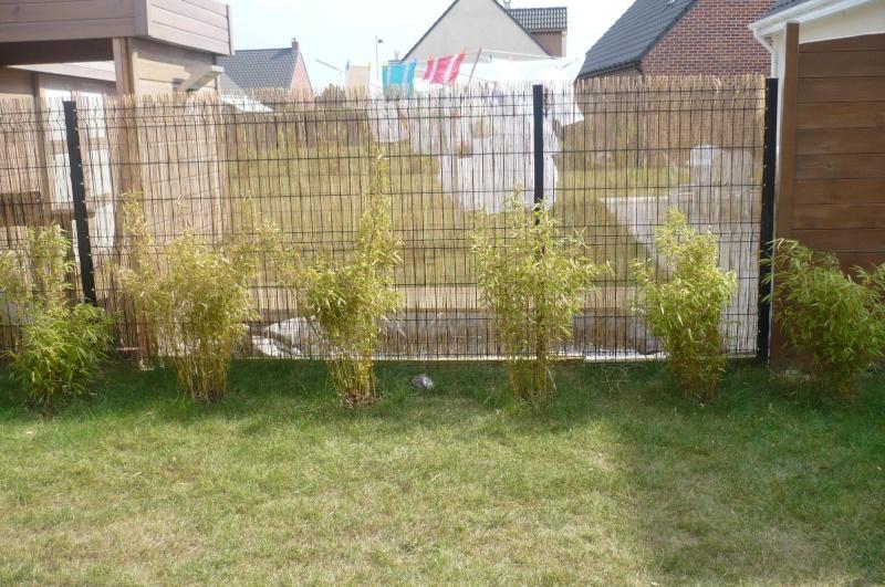 Bambou fargesia rufa croissance pivoine etc - Comment planter des bambous ...