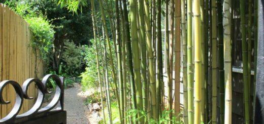 bambou archives - pivoine etc
