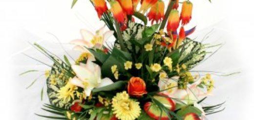 Plante exotique exterieur resistant au gel pivoine etc - Plante exotique exterieur resistant au froid ...