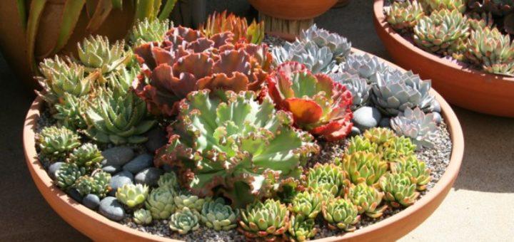 Pot pour plantes grasses pivoine etc for Plante decorative exterieure