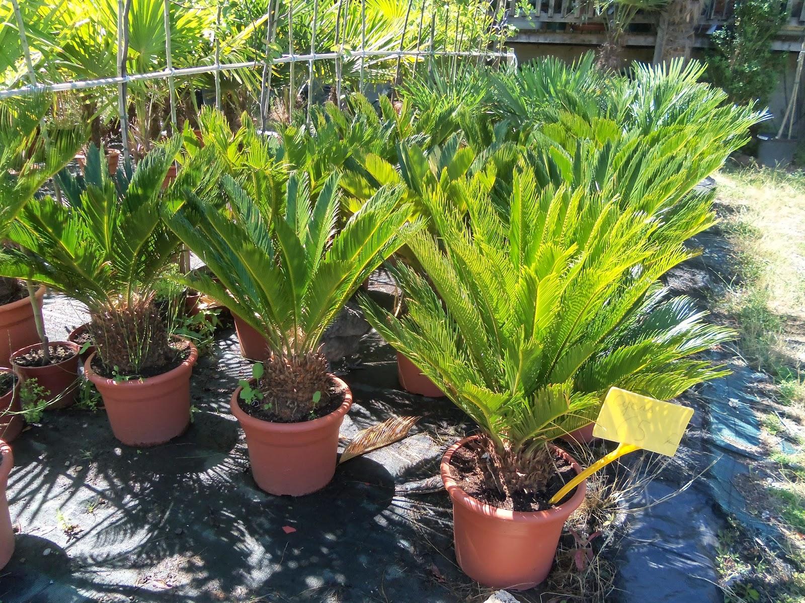 plante r sistant au froid pivoine etc