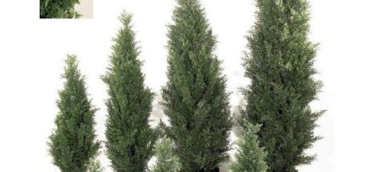 Arbre pot exterieur pivoine etc for Plante exterieur hiver