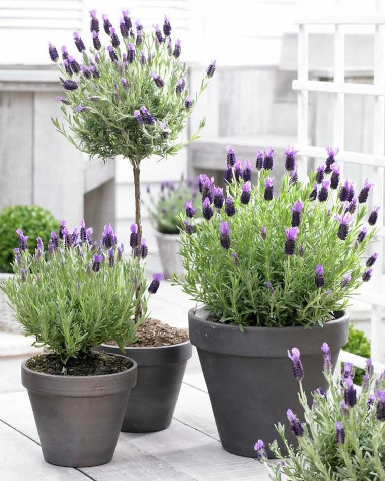 Deco plante exterieur pivoine etc for Plante exterieur pot