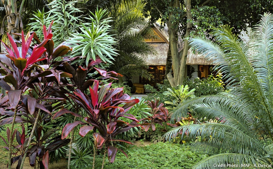 Plantes exotiques et tropicales pivoine etc for Plantes tropicales exterieur