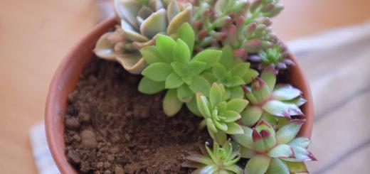 Plante hiver archives pivoine etc for Arrosage plante hiver