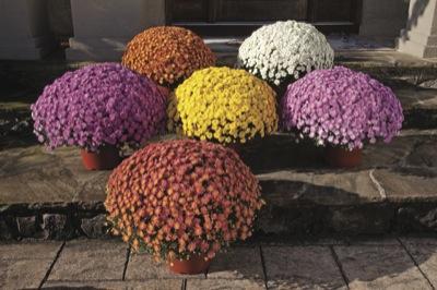 plantes fleuries exterieur hiver. Black Bedroom Furniture Sets. Home Design Ideas