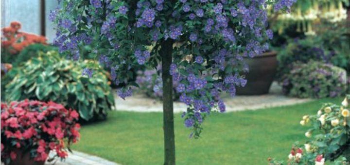 Arbuste a fleur en pot exterieur pivoine etc for Arbuste en pot exterieur