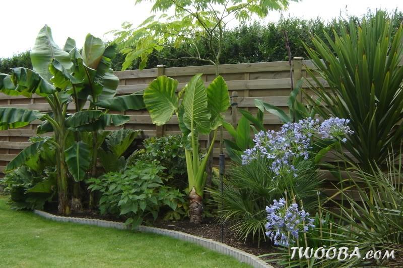 Exemple jardin exotique pivoine etc - Exemple de jardinieres d hiver ...