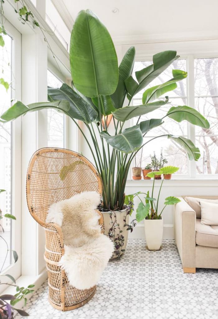 plante exotique pour interieur