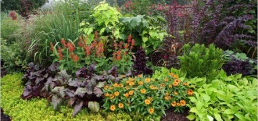 les plantes grasses entretien pivoine etc. Black Bedroom Furniture Sets. Home Design Ideas