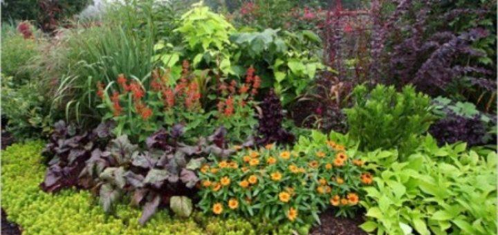 Fleurs plantes et jardins pivoine etc for Plantes et jardins adresse