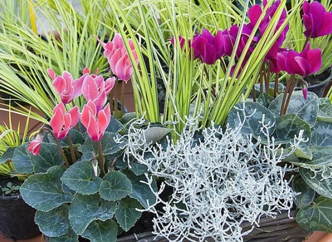 Fleurs d automne et d hiver pivoine etc for Plante hiver exterieur
